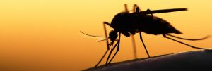mosquito_on_human_fly_screen_protection